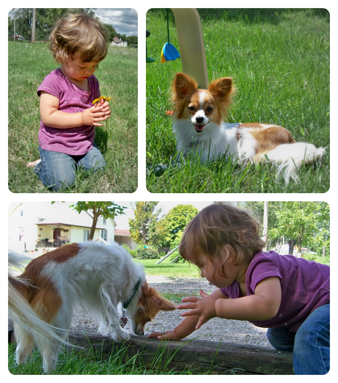 baby and dog papillon