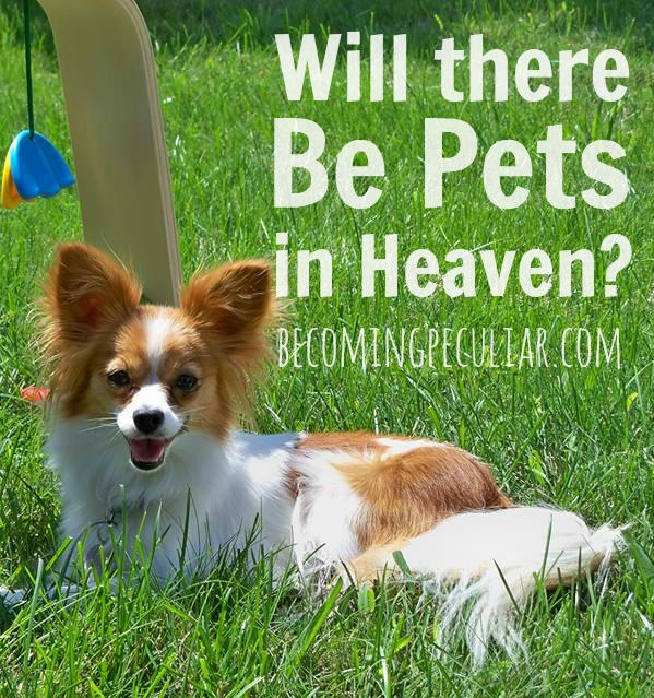 Will there be Pets in Heaven? Reflections on the Resurrection