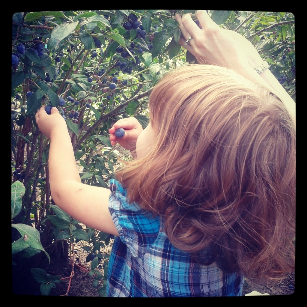 picking berries