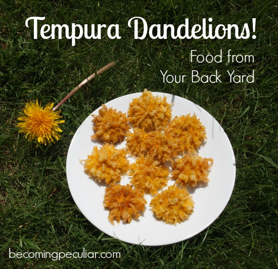 Tempura Dandelions (Battered and deep-fried!)