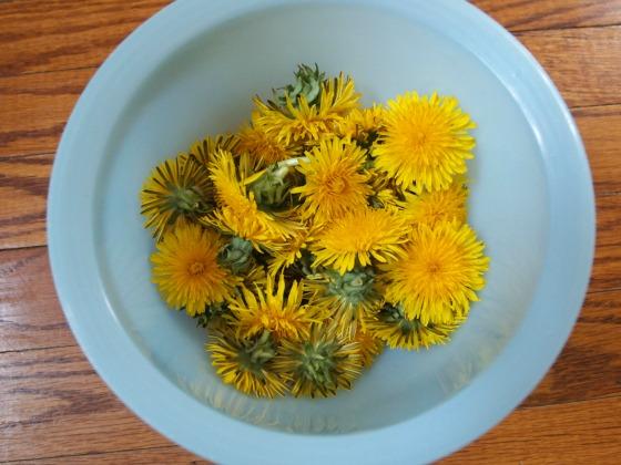 Dandelions for making tempura dandies