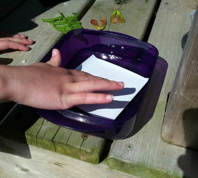 making sunprints: fern 4