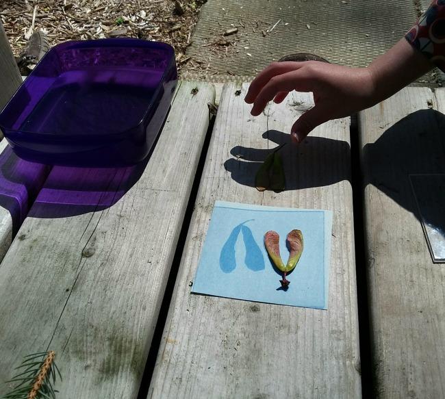sun prints - maple keys