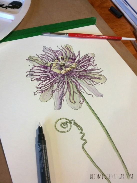 passionflower watercolour