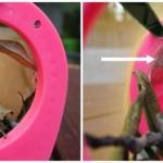 cocoon vs chrysalis