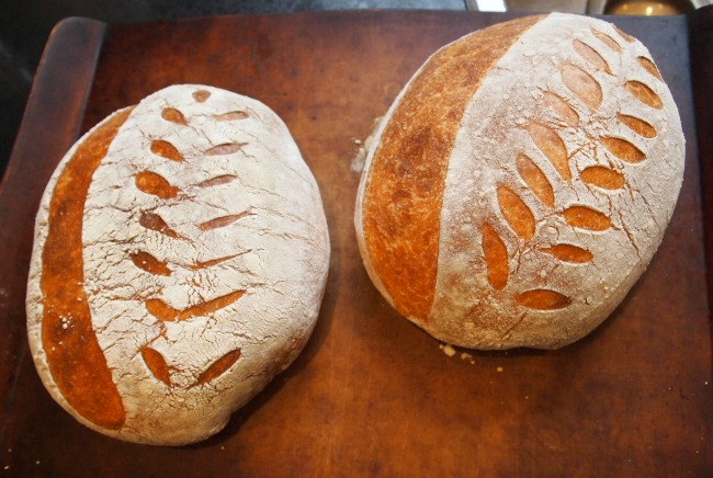 finished sourdough bread loaves