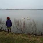 geese blog