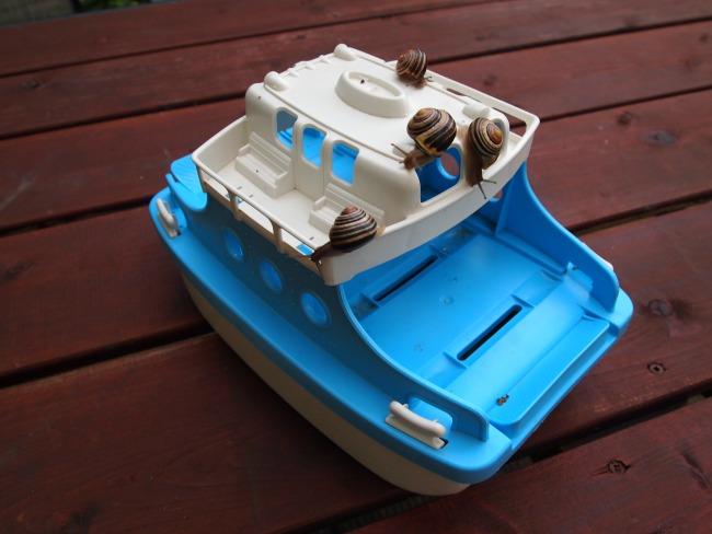 snails on a boat