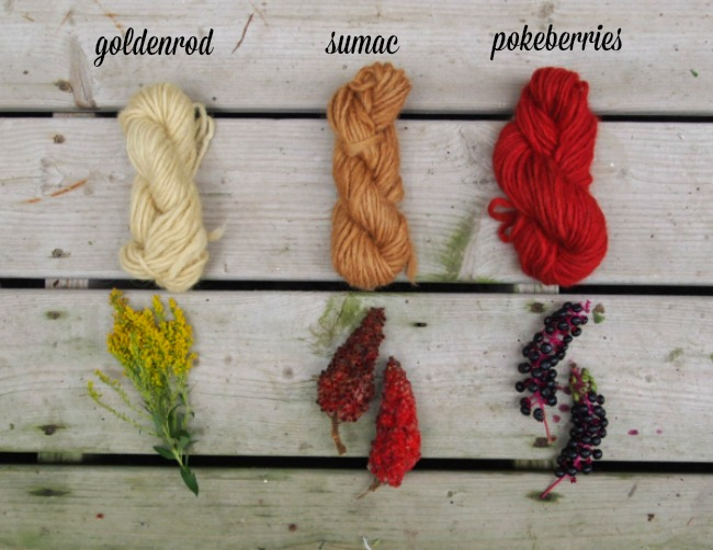natural plant dyes - goldenrod, sumac, pokeberry