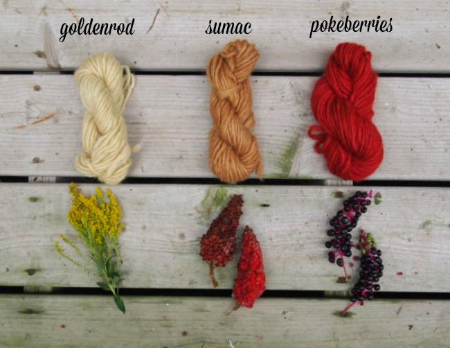 natural plant dyes - goldenrod, sumac, pokeberry