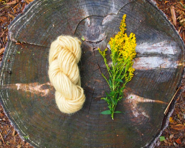 natural goldenrod dye