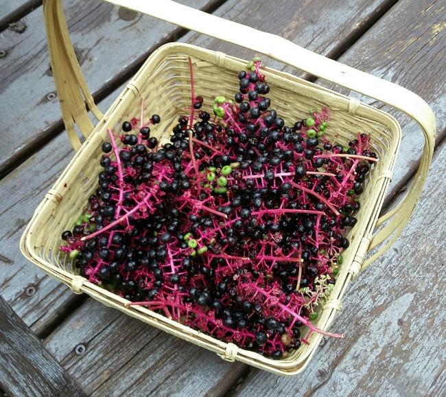pokeberries