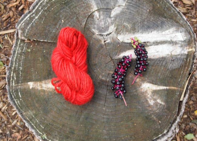 homemade pokeberry dye